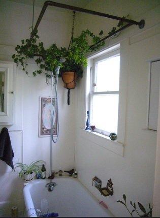 bath plants