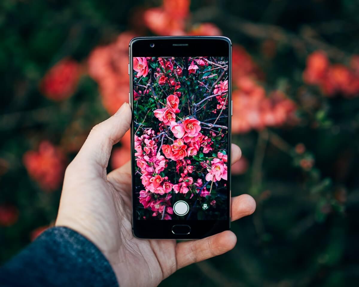 flower identifier app
