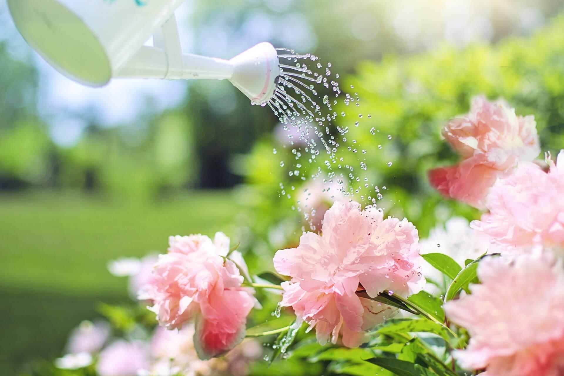 garden watering (1)