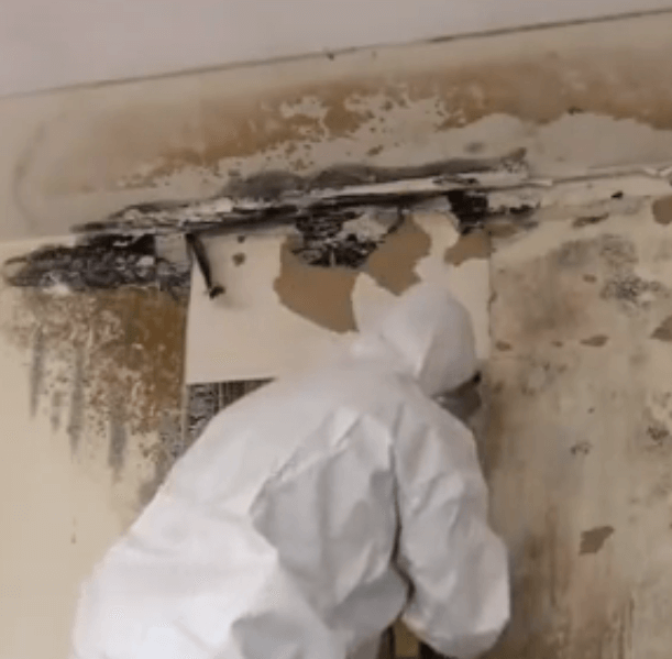 Mold_Remediation-Expert