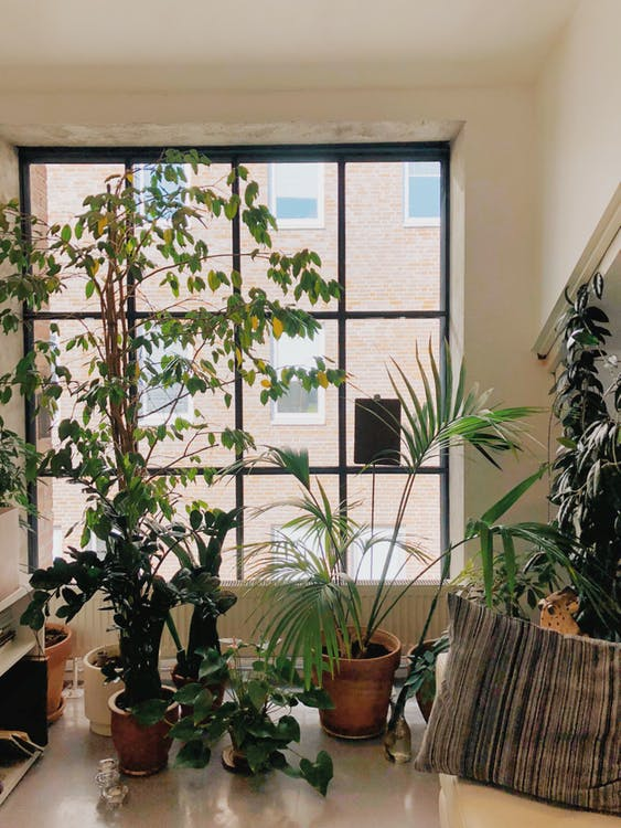 Green ideas for home