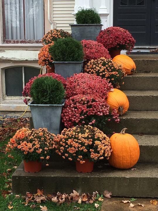 Autumn-Flowers