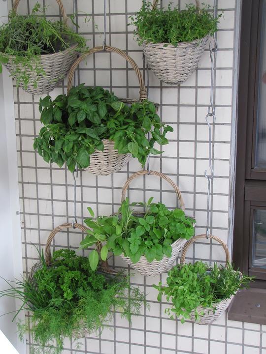 vertical planting