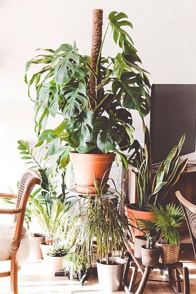 plant room divider