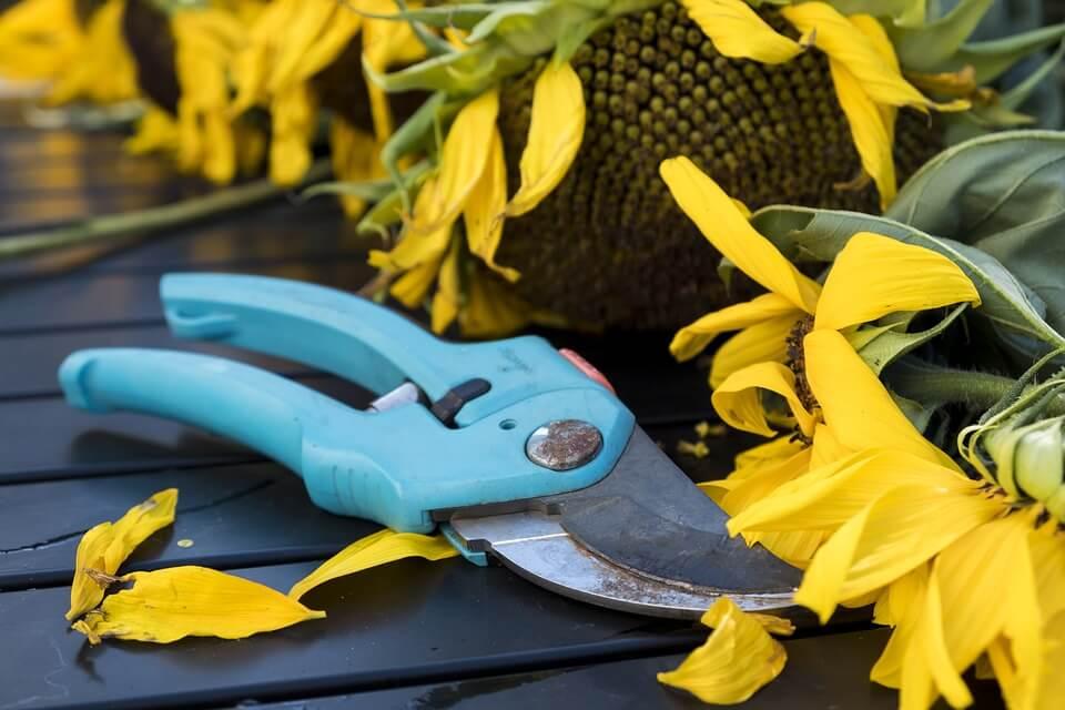 Pruners for gardening