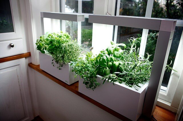 indoor plants containers