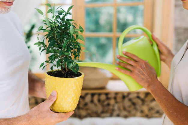 indoor plants care (1)