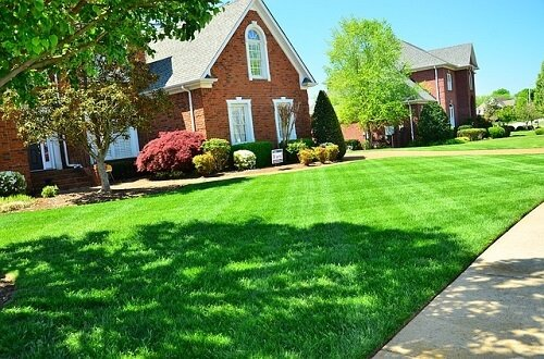 Planting grass seed vs sod: Answers to the never-ending debate