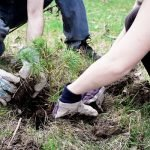 Factors To Consider Before Hiring Tree Planting Services