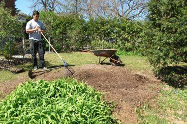 tree planting service providers