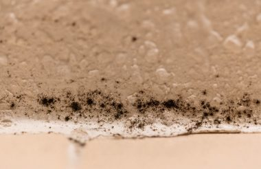 How to Remove and Prevent Mold in Bathroom?