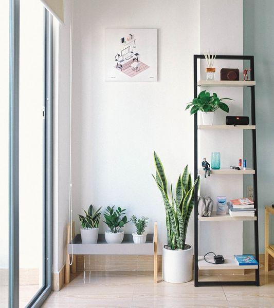 plant decoration ideas