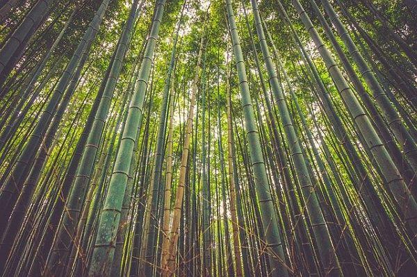 bamboo building material