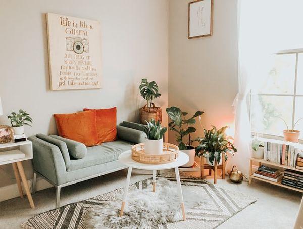 indoor plants apartment