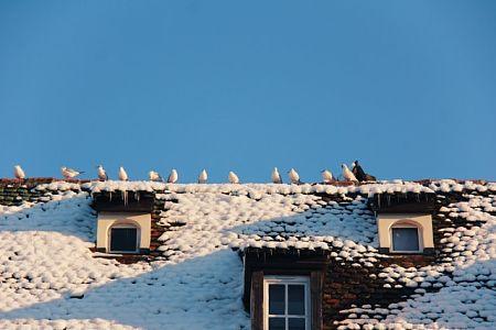 prepare roof for winter