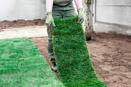 best time to lay sod