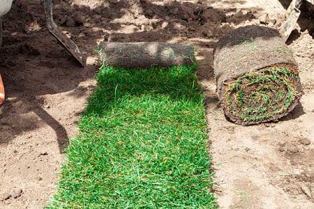 sod installation tips