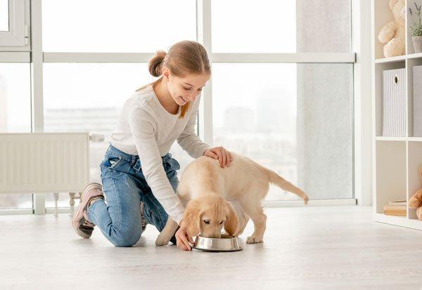 good pet parenting