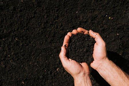 lawn seeding soil