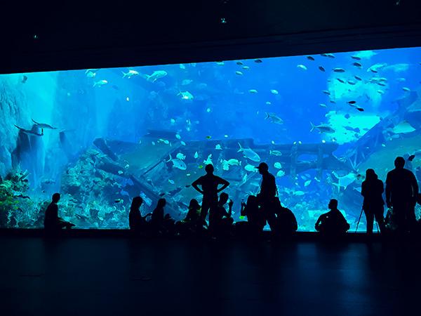 aquarium in atlanta pros